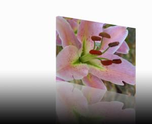 Geopende bloem