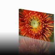 Olieverf bloem