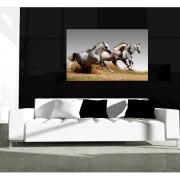 Wilde paarden canvas