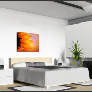 Zonnebloem Canvas 3
