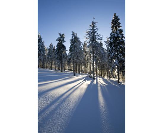 Winter zon landschap